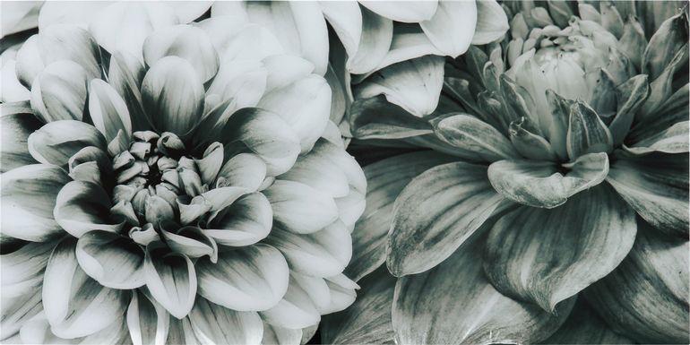 Blooming Season Artwork