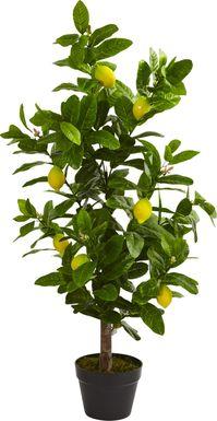 Daira Green Lemon Silk Tree