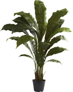 eladio green bird s nest silk plant
