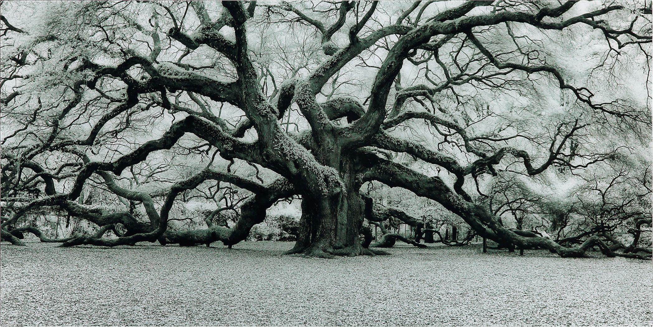 Enchanting Tree Artwork