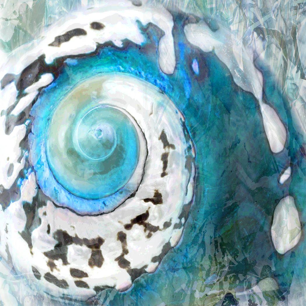 Shinning Shell Blue Artwork